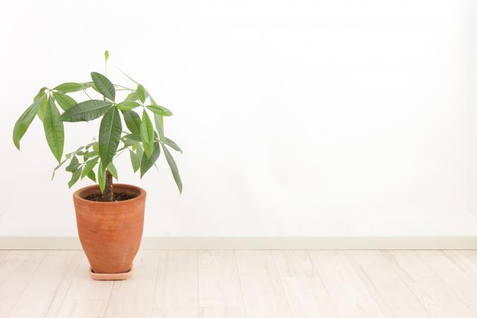 利用风水植物改善生活和运气